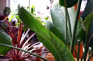 レンタル植木はコチラのイメージ